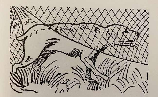 cane che caccia con la rete
