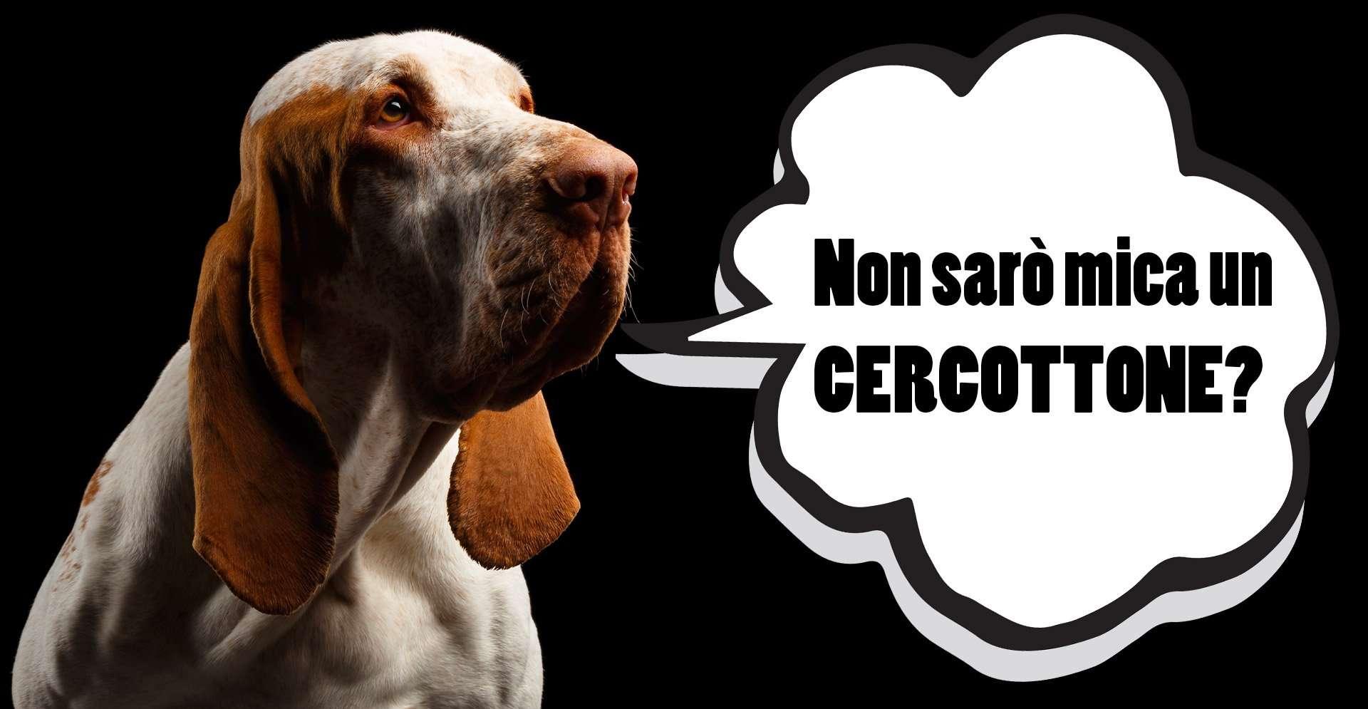 L'istinto predatorio olfattivo e visivo nel bracco italiano