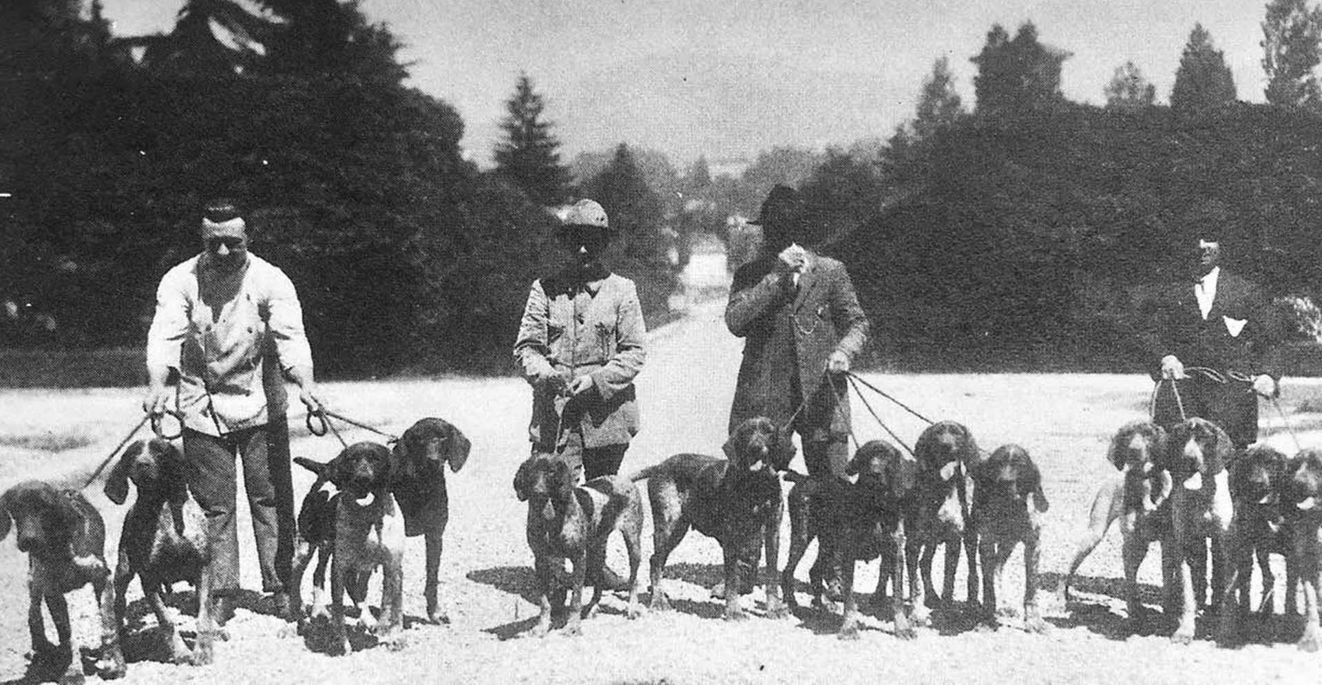 Unificazione dello standard di razza del bracco italiano 1923