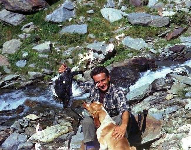 bracco italiano caccia alpina