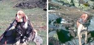 caccia alpina